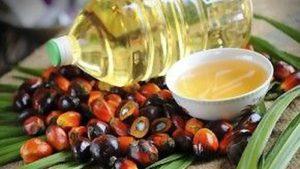 Olio di palma acido palmitico