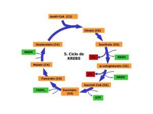 benefici degli acidi carbossilici