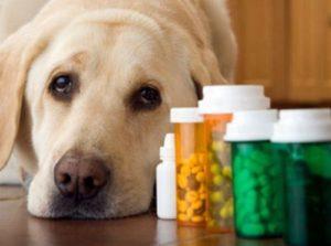 uso di acidi forti Farmaci veterinari